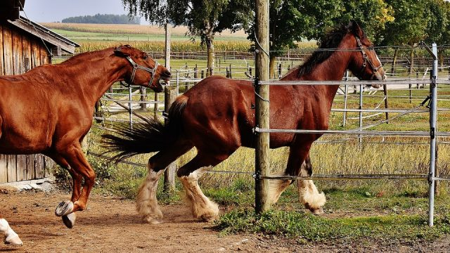 Bringing the Horses (Race Betting) along with You on Your Getaway