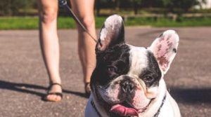 Best camping holidays to bring your dog along