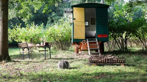 Glamping interview with the Nut Plat Retreat